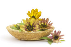 Sunflowers on white background Royalty Free Stock Image