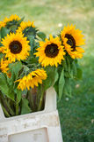 Sunflowers in a white vase Royalty Free Stock Photos