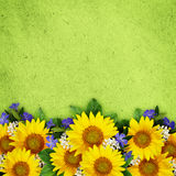 Sunflowers and wild flowers background Royalty Free Stock Photos