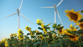 Sunflowers and wind power Royalty Free Stock Image