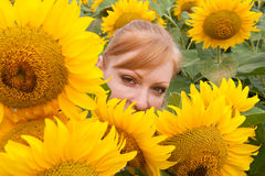 Sunflowers and woman 2 Stock Photo