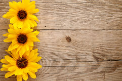 Sunflowers on wood Stock Photos