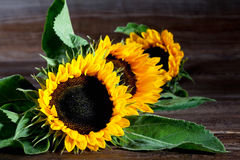 Sunflowers on wood Royalty Free Stock Images