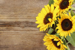 Sunflowers on wooden background Stock Image