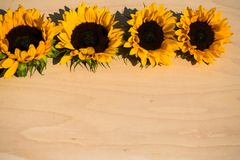Sunflowers On Wooden Background Autumn Stock Photography