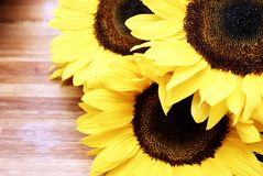 Sunflowers on a wooden table. Three sunflowers on a wooden table stock photography