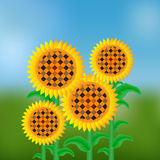 Sunflowers. Yellow-brown sunflowers on a background of blue sky and green meadow Royalty Free Stock Photography