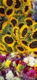 SunflowersAt FlowerStand obraz stock