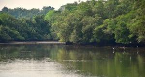 Sungei Buloh, våtmarkreserv parkerar Royaltyfria Foton