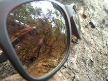 Sunglass auf einem Baum lizenzfreie stockbilder