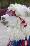 Sunglass d'uso della lama bianca e una sciarpa colorata, Perù Fotografia Stock