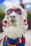 Sunglass d'uso della lama bianca e una sciarpa colorata, Perù Fotografia Stock Libera da Diritti