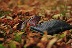 sunglasses Foto de Stock Royalty Free