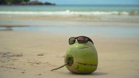 Sunglasses on coconut stock footage