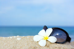Sunglasses and flower Stock Photography