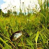 Sunglasses in grass Stock Image