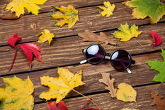 Sunglasses and leafs Royalty Free Stock Photo
