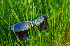 Sunglasses lying in a grass. Elegant sunglasses lying on a bright green grass Royalty Free Stock Images