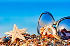 Sunglasses and marine life on the beach Royalty Free Stock Image