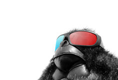 Sunglasses monkey Royalty Free Stock Photos