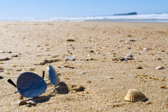 Sunglasses on Sandy Beach. A pair of tinted sunglasses on beach sand.Shallow focus on foreground where sunglasses is. There are some seashells scattered around stock images