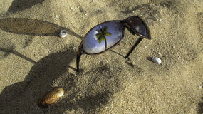Sunglasses and sea shells. On sand tropical beach and coconut palm trees reflected on the glass Stock Images