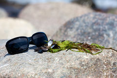 Sunglasses and seaweed Stock Photos