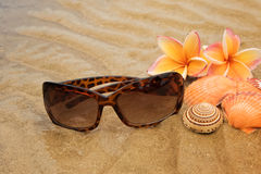Sunglasses, shells on sand beach Stock Image