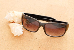 Sunglasses And Small Conch Stock Images