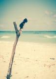 Sunglasses on wooden post. On caribbean beach Royalty Free Stock Photos