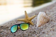 Sunglesses, skorupa i rozgwiazda na piaskowatej plaży, Podróż, wakacje, wakacje tło kosmos kopii zdjęcia royalty free