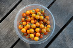 Sungold tomatoes Royalty Free Stock Images