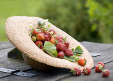 Sunhat with strawberry Royalty Free Stock Photography
