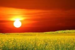 sunhemp в долине ‹in†поля и заходе солнца и небе цвета стоковое фото