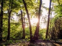 Sunhine-Wald Stockbilder
