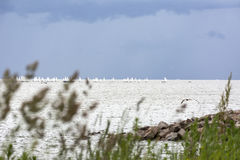Sunie, łodzie z białymi żaglami w morzu na horyzoncie, sailboa Zdjęcia Stock