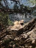 Sunken карьер около Kyiv, Украины стоковое изображение rf