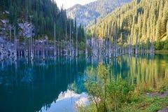 Sunken лес озера Kaindy Стоковая Фотография RF