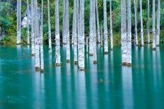 Sunken лес озера Kaindy Стоковые Изображения RF