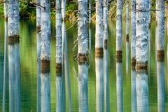Sunken лес озера Kaindy Стоковое фото RF
