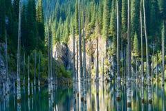 Sunken лес озера Kaindy Стоковые Изображения