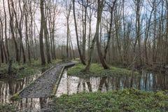 Sunken путь в лесе в зиме Стоковые Изображения