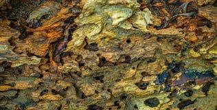Sunken древесина Стоковая Фотография RF
