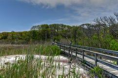 Sunken Forest - Fire Island, New York stock photography