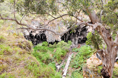 Sunken Forest: Lake Cave, Western Australia Royalty Free Stock Photo