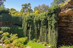 Sunken Garden - Mount Gambier. The Sunken Garden was built over a century ago in the Umpherston Sinkhole - Mount Gambier, SA, Australia Stock Images