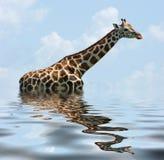 Sunken Giraffe Royalty Free Stock Photo