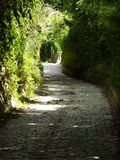 "Sunken road. A romantic sunken road on the ""Bisamberg"" in Vienna, Austria Stock Photos"