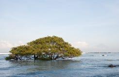 Sunken tree. High marea of the ocean have sunken this tree in Gili Trawangan, Indonesia Stock Images