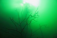Sunken tree Royalty Free Stock Images